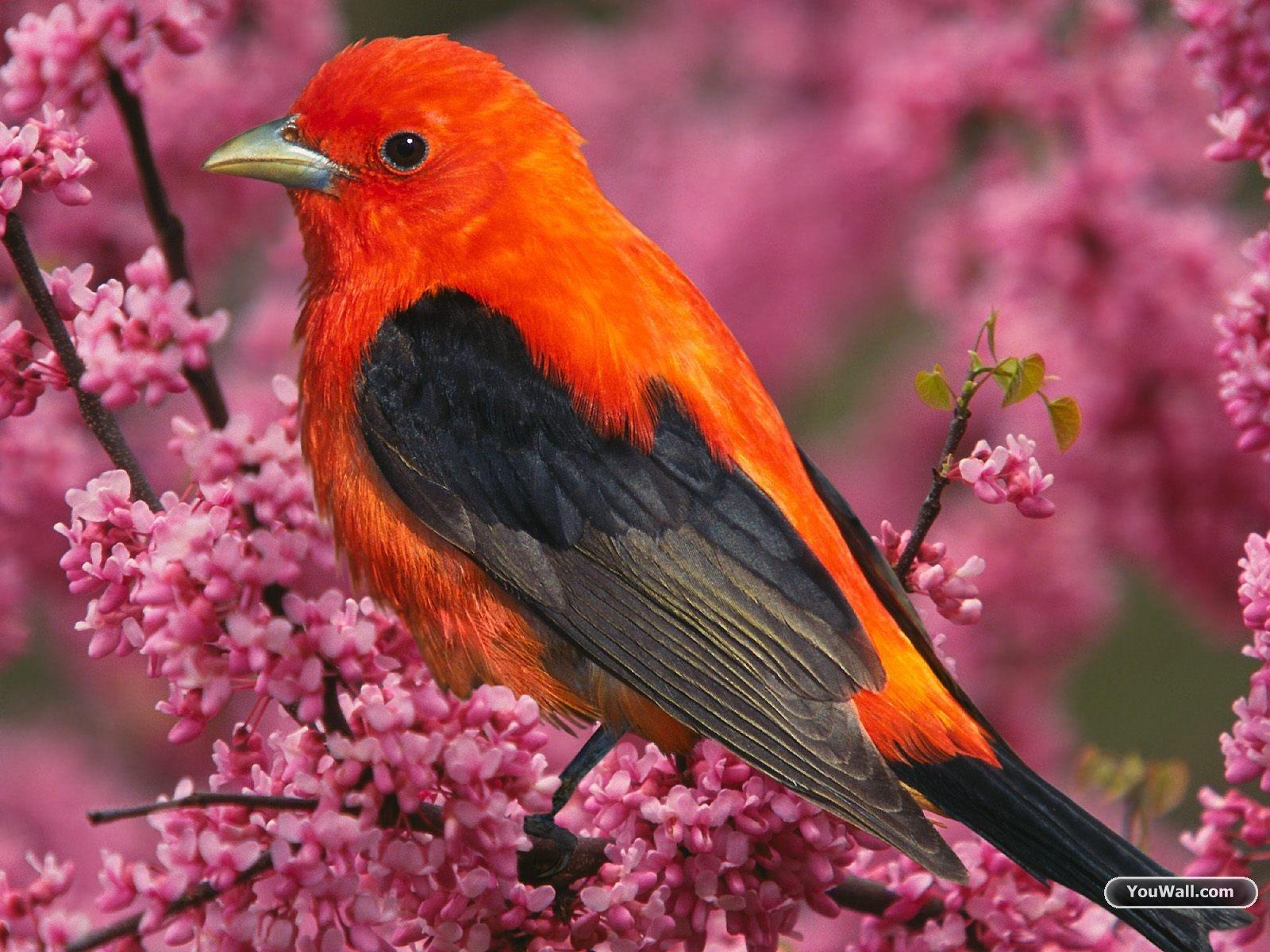Wallpaper Gallery Love Bird Wallpaper: Beautifull Birds Wallpapers