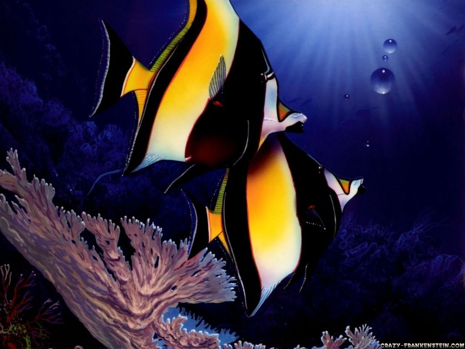 Beautiful water animals wallpapers daertube for Wallpaper fish in water