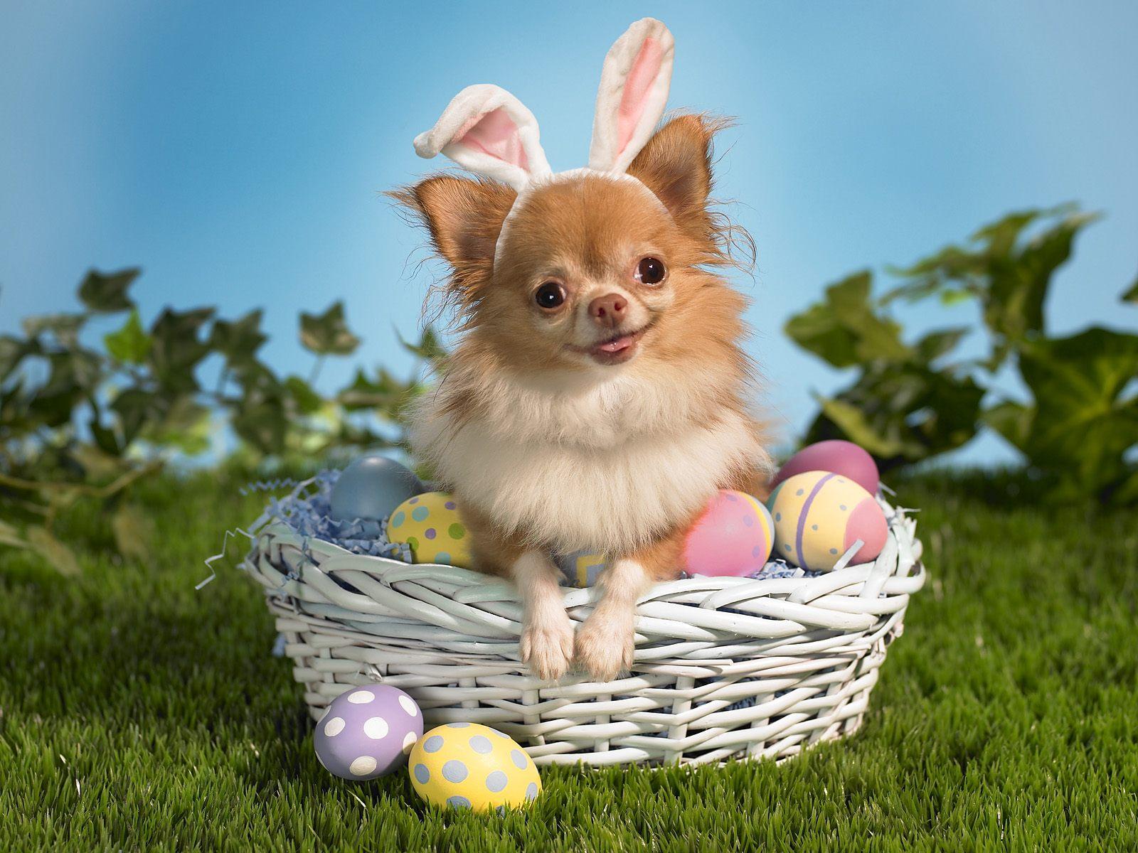 Easter desktop backgrounds wallpaperseaster desktop - Easter bunny wallpaper ...