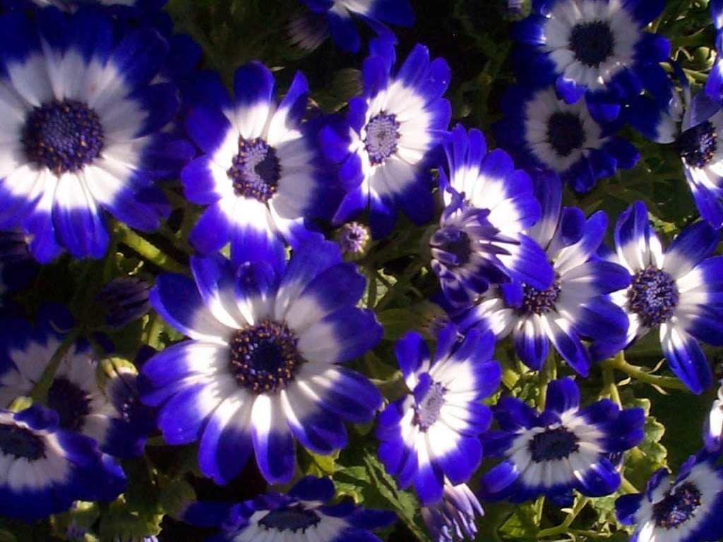 Flowers wallpapers daertube - Beautiful flower images wallpapers ...